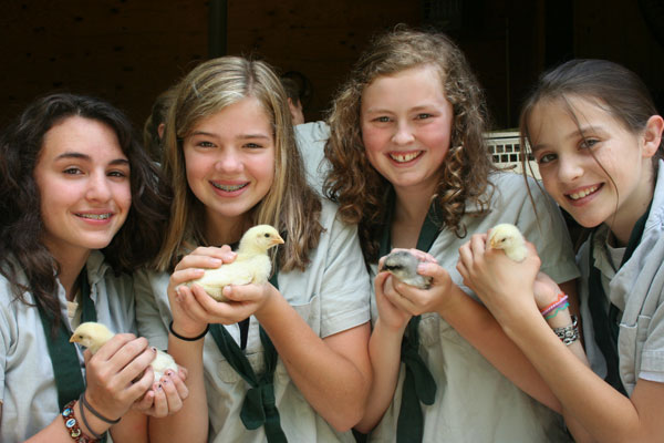 Campers holding baby chicks at Camp Merrie-Woode
